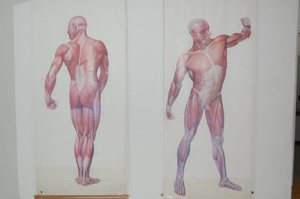 Anatomie Biomechanik